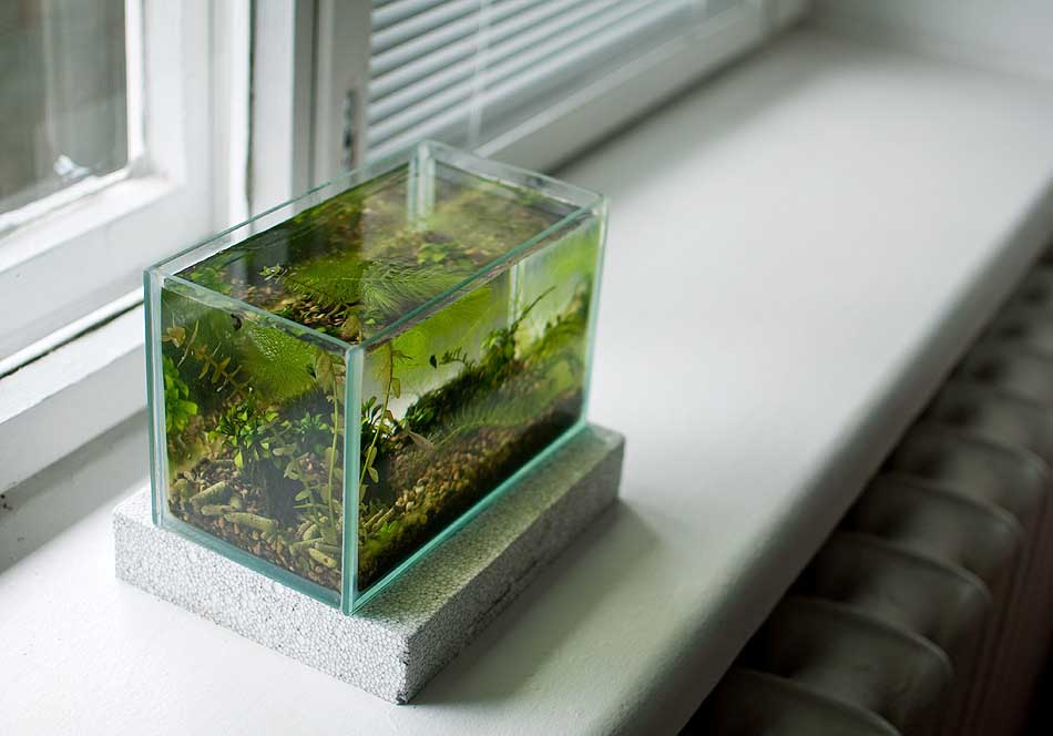 воды аквариум на подоконнике фото маслин или оливок